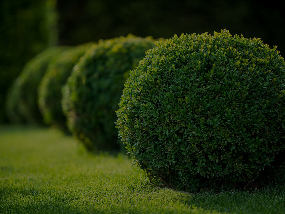 Fishers Landscaping