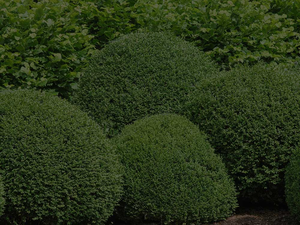 Fishers Shrubs and Hedges